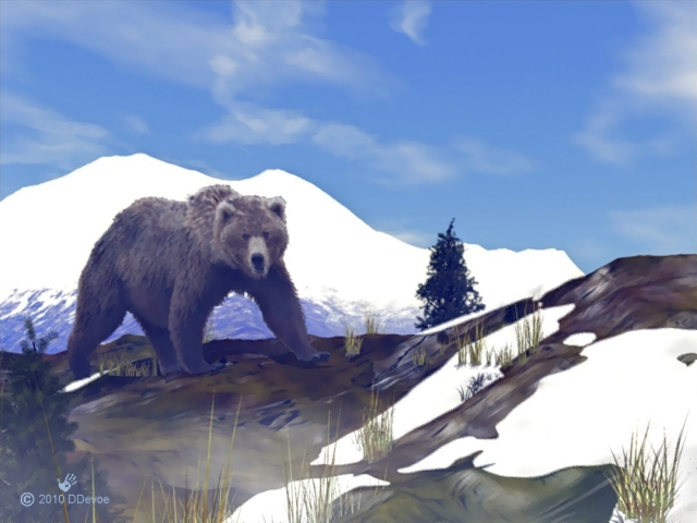 A grizzly searches for food high in the mountains as the last of the winter snow melts.