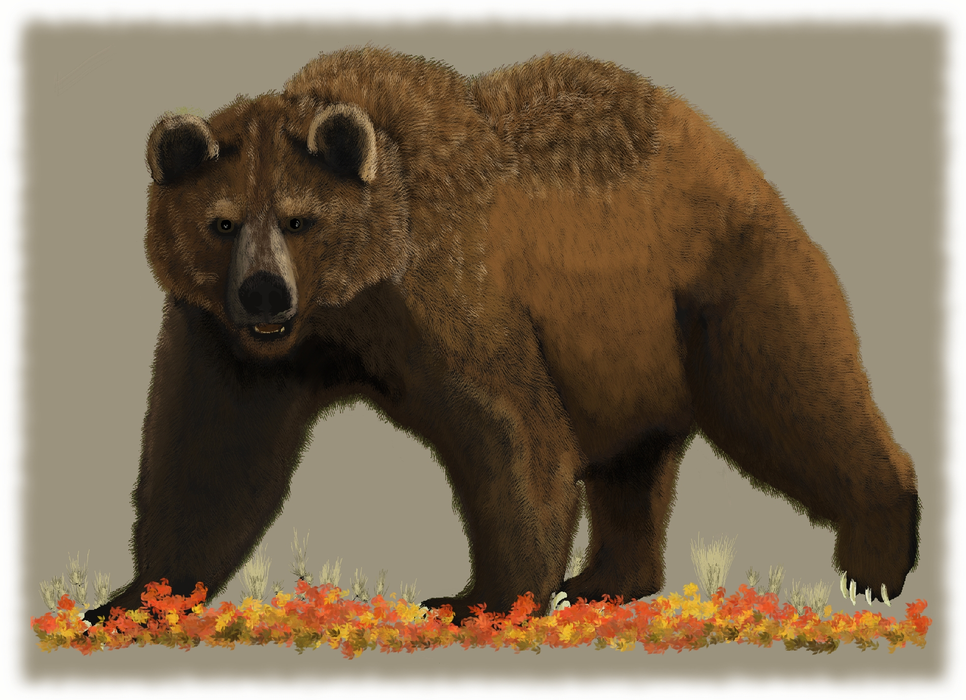 Bear Cold Lands Artist