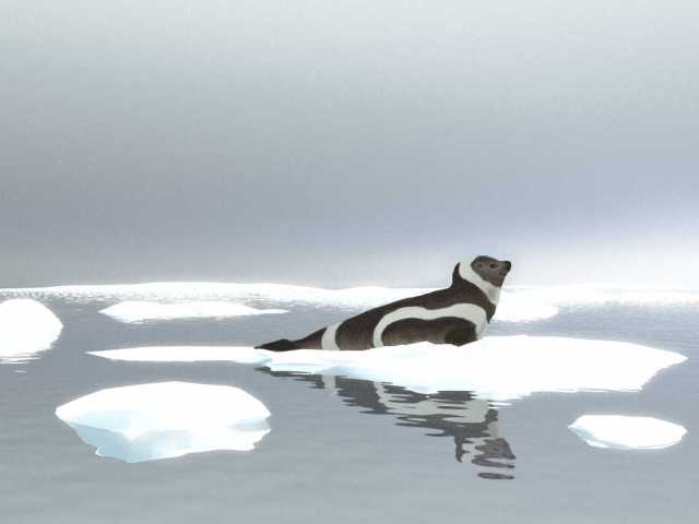a ribbon seal resting on an ice floe.