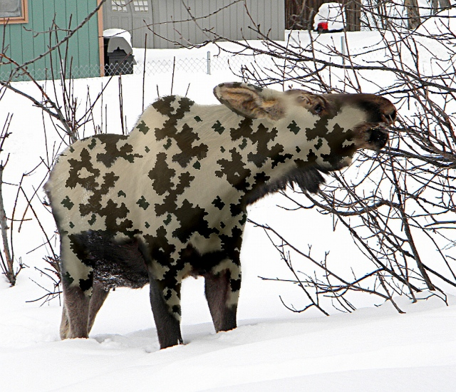 camouflage moose