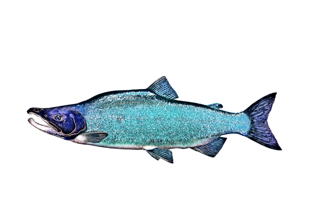 the mythical cyanotic salmon bar & grill in kenai, alaska