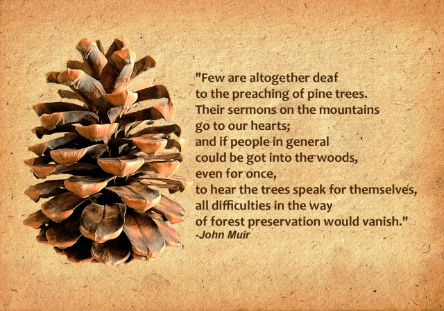 john muir quote and pine cone