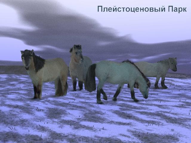 yakut horses at pleistocene park in siberia